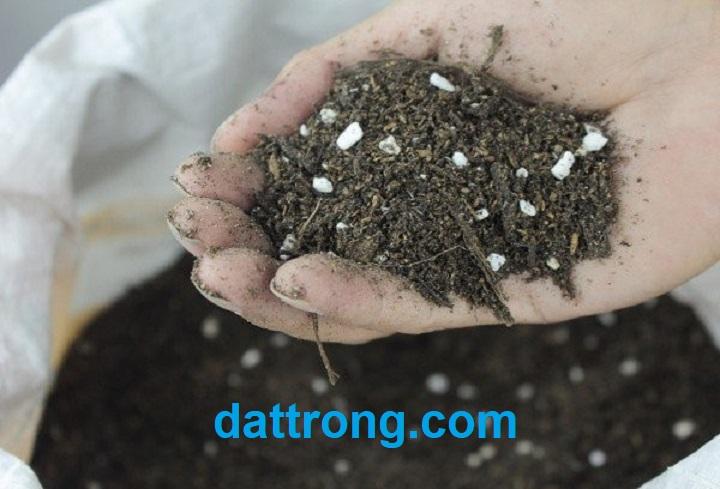 đất trồng cây namix