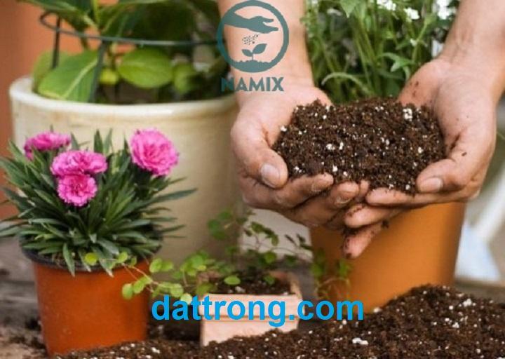 Giá thể đất trồng hoa chậu cơ bản và thông dụng
