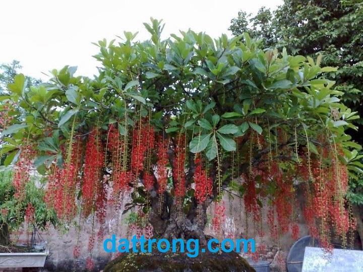 đất trồng cây cảnh