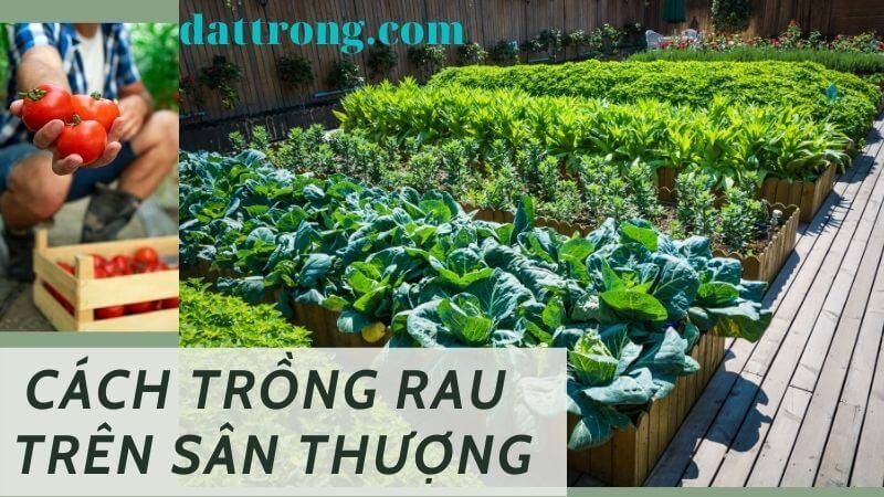 Cách trồng rau trên sân thượng luôn xanh tốt quanh năm