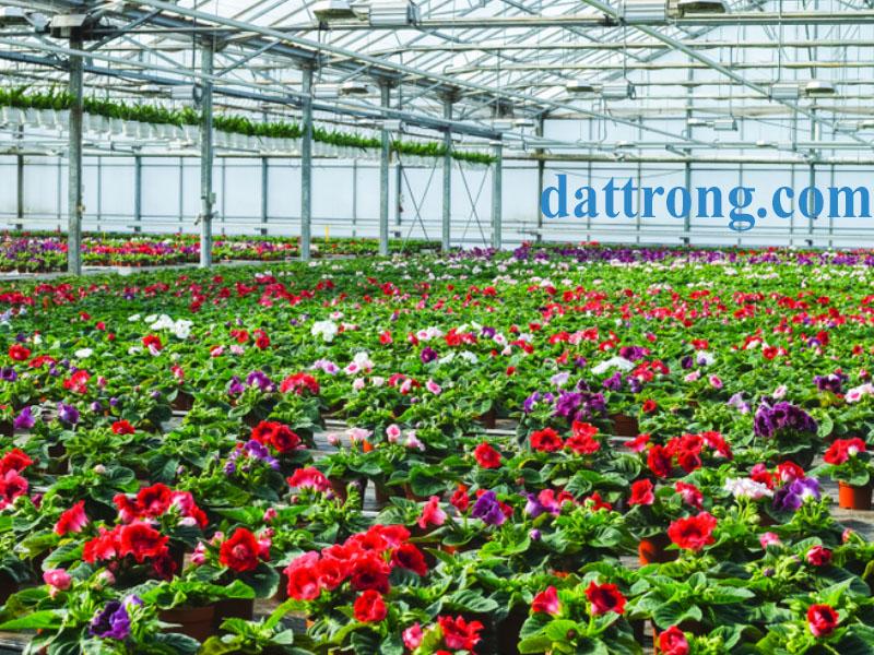 vườn hoa tử la lan